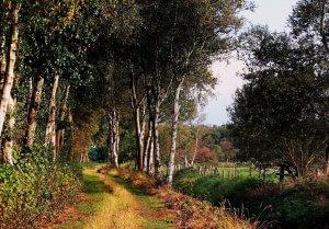 Teufelsmoor Landschaft