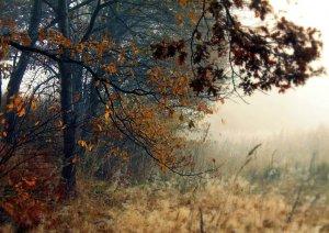 teufelsmoor-landschaft
