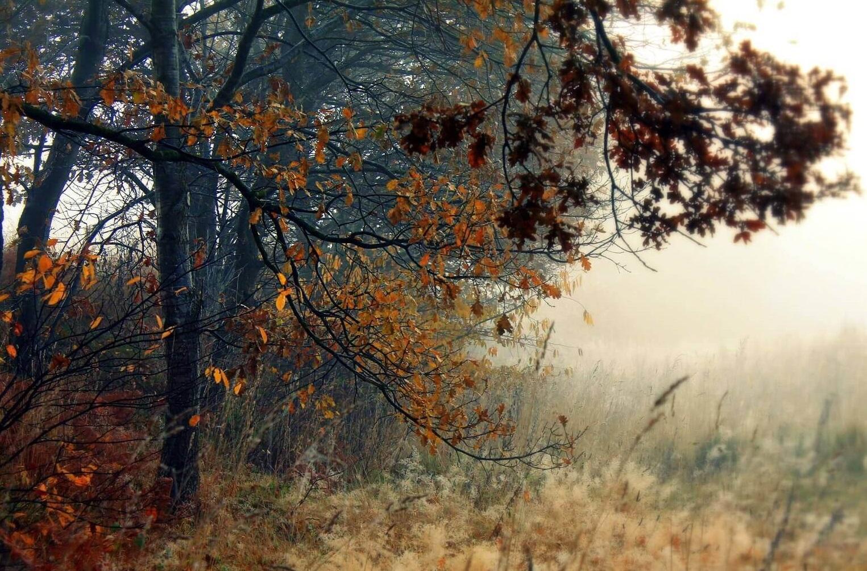 teufelsmoor-landschaft-klein