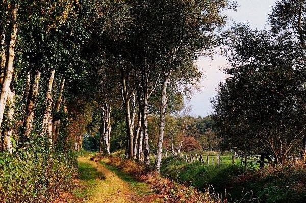 teufelsmoor-landschaft-600x399